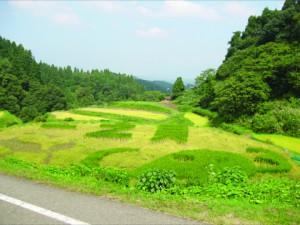 栃尾一之貝田んぼアート _色の異なる米で植えています。毎年都市圏の大学生が稲植え、稲刈りに来ます。 (1)